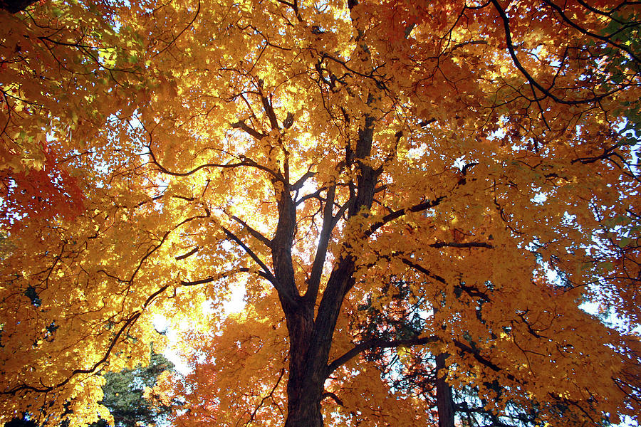Glowing Tree Photograph