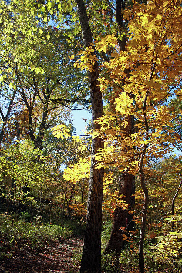 Golden Trail Photograph