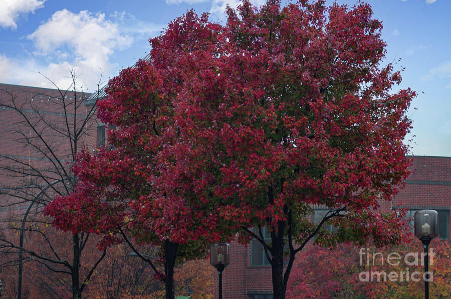 Greenville Tech - Autumn Colors Photograph
