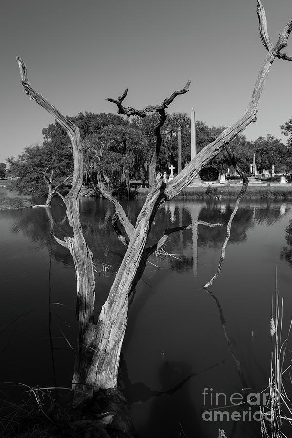 Heavenly Reach - Magnolia Cemetery Photograph