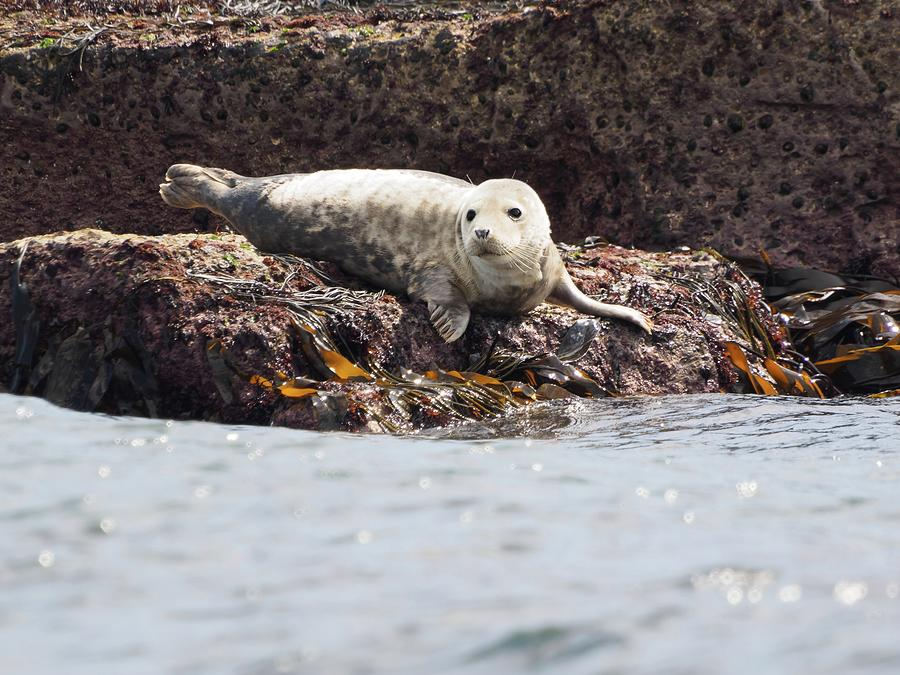 Harbor Seal - Supporting World Wide Fund For Nature Photograph