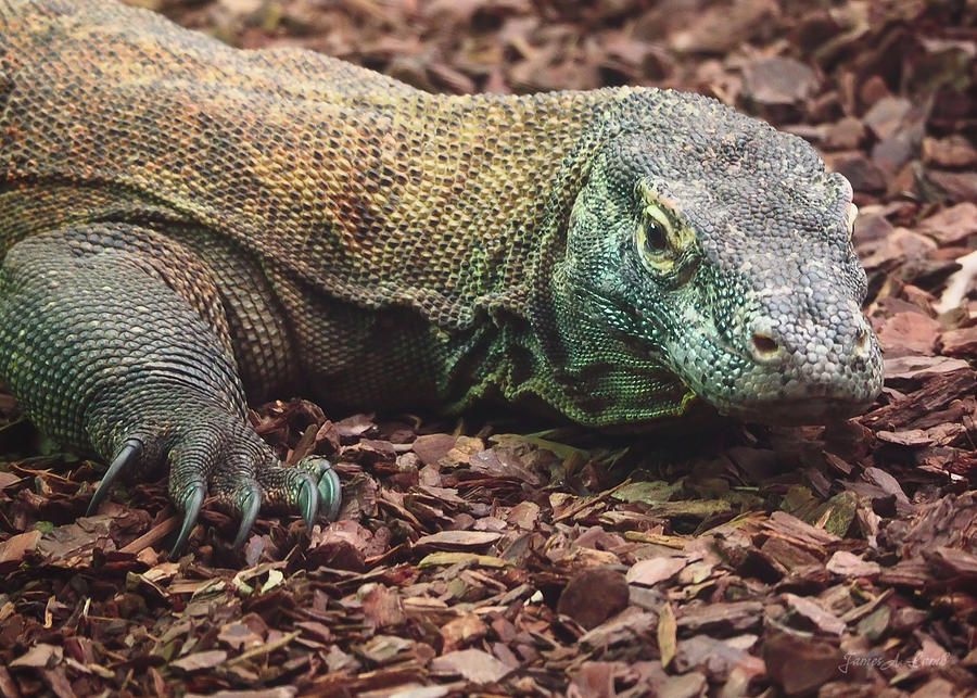 Komodo - Supporting World Wide Fund For Nature Photograph