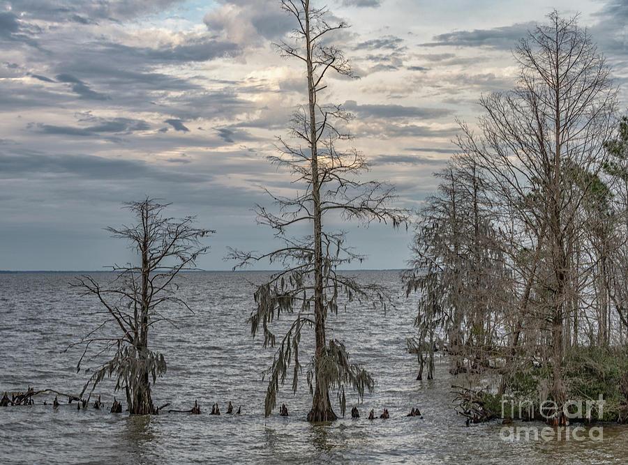 Lake Mountrie - Cypress Trees Winter Solitude Photograph