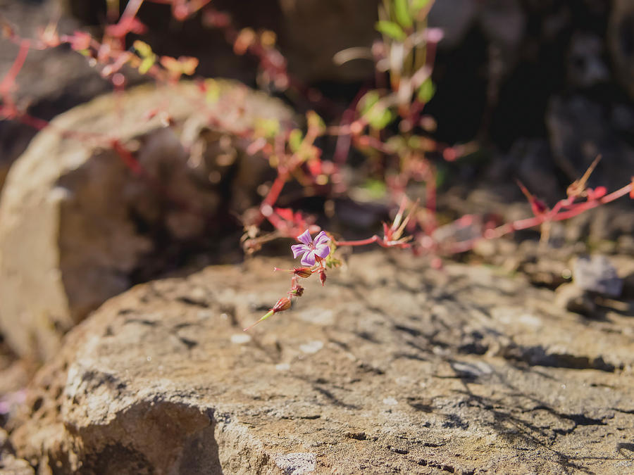 Living On The Rocks Photograph