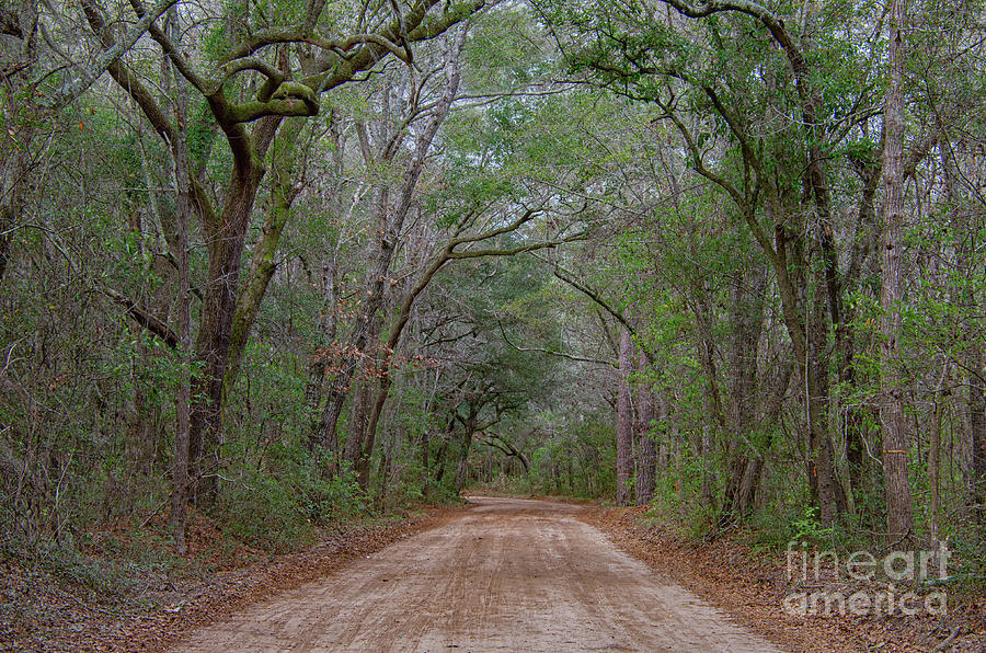 Lowcountry Dirt Road To The Angel Oak Photograph