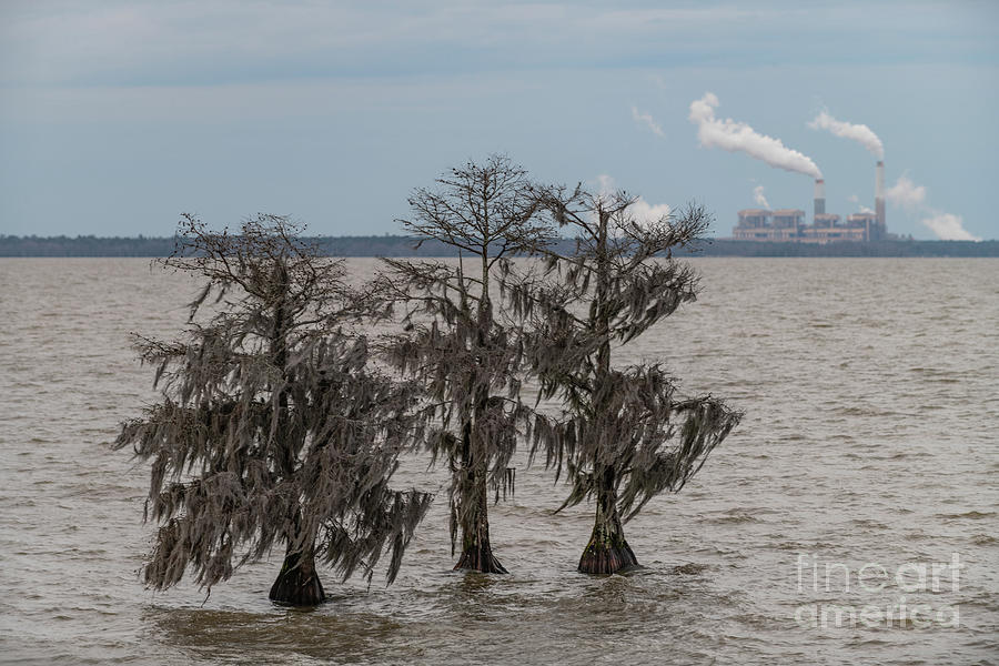 Lowcountry Winter - Lake Moultrie Photograph