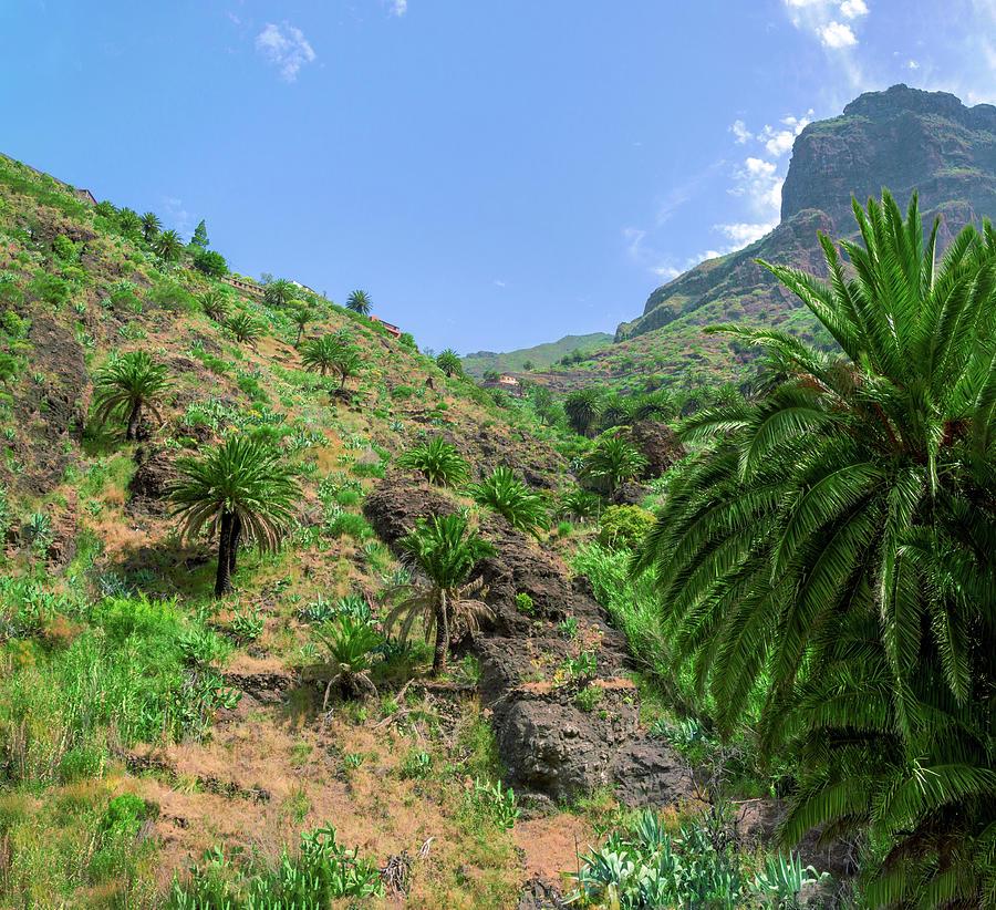 Mountain Slopes Of Masca Photograph