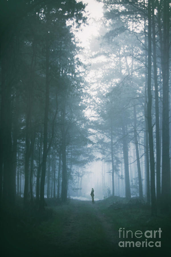 Mystery In The Mist Photograph