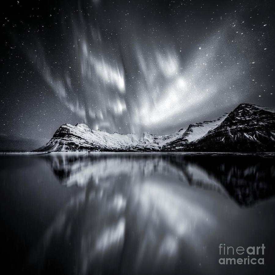 Overnight Sensation Photograph