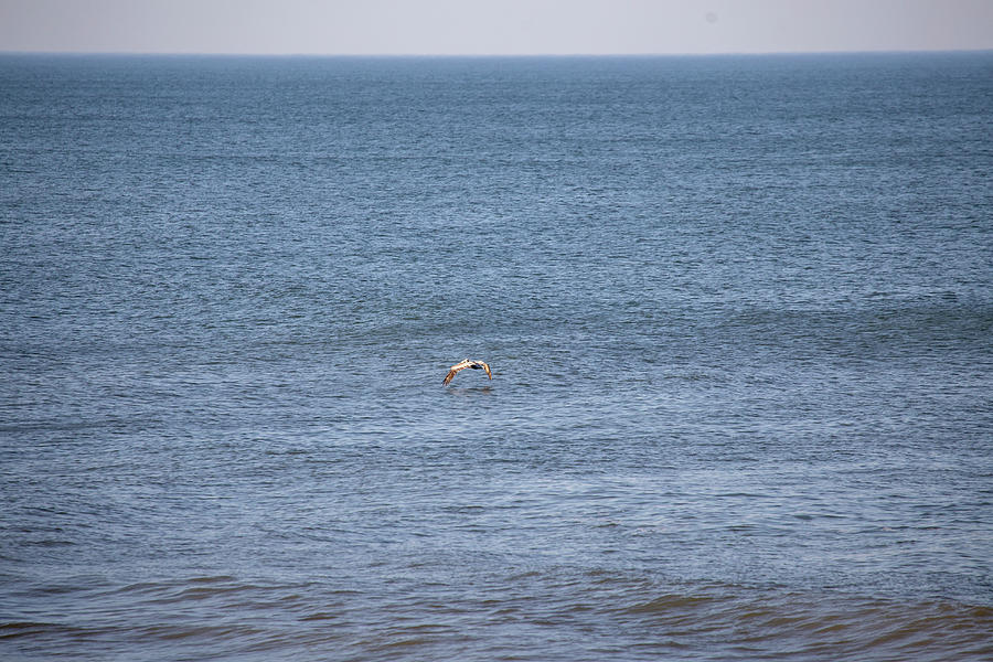 Pelican 2 Photograph