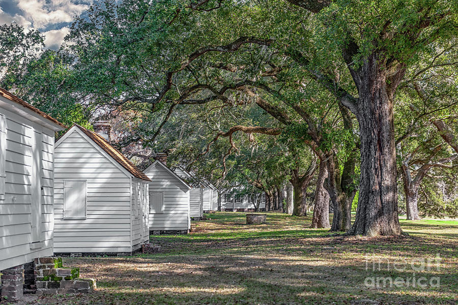 Plantation Cabins - Mcleod Plantation Photograph