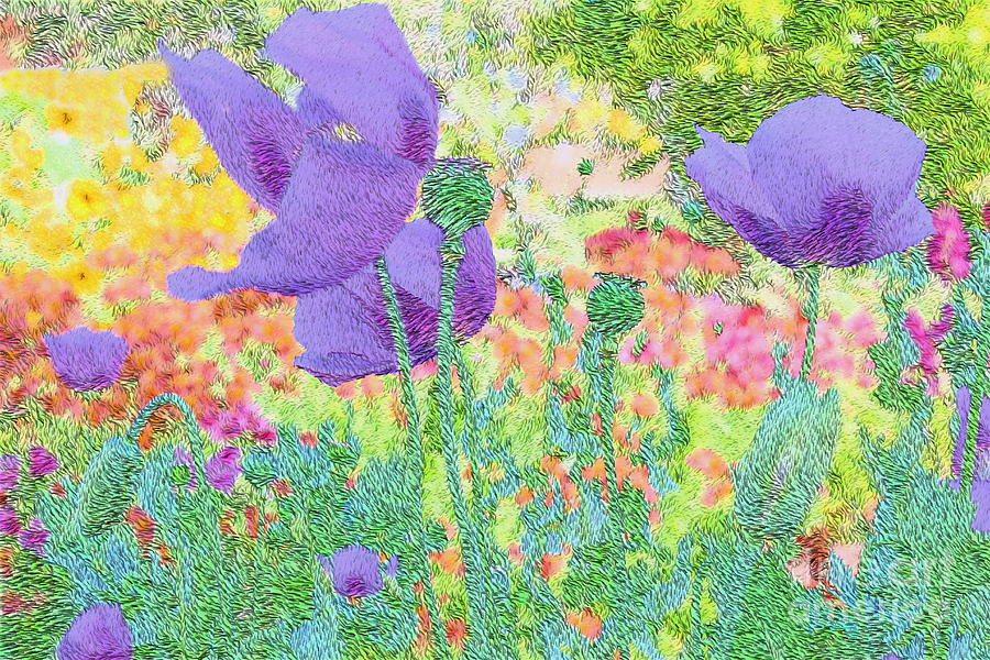 Purple Poppies Photograph