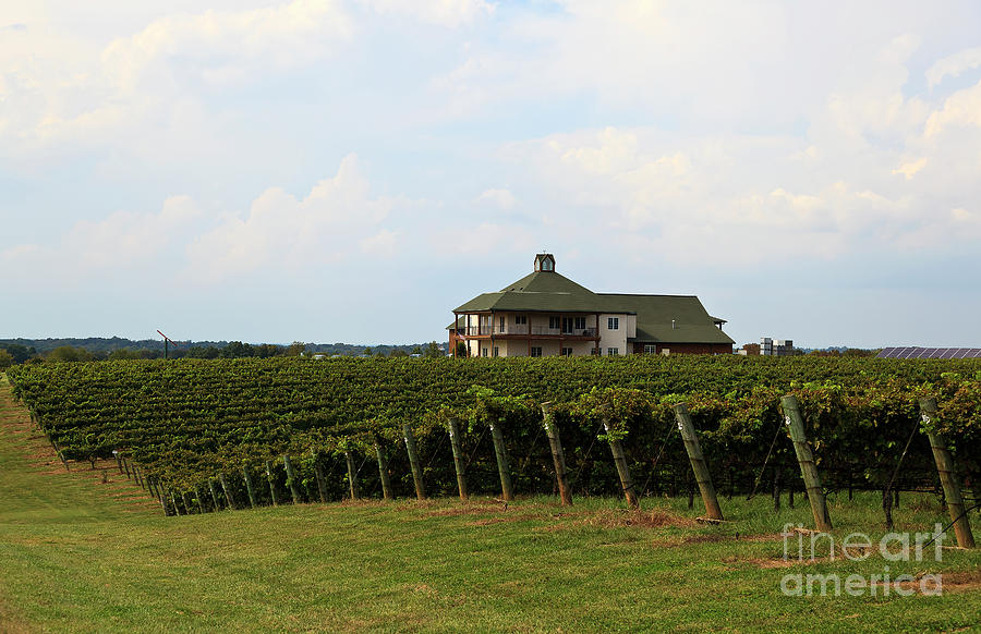 Raylen Vineyards And Winery In Mocksville North Carolina Photograph