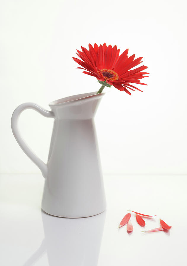 Red Gazania Flower On A White Stylish Vase. Creative Still Life Photograph