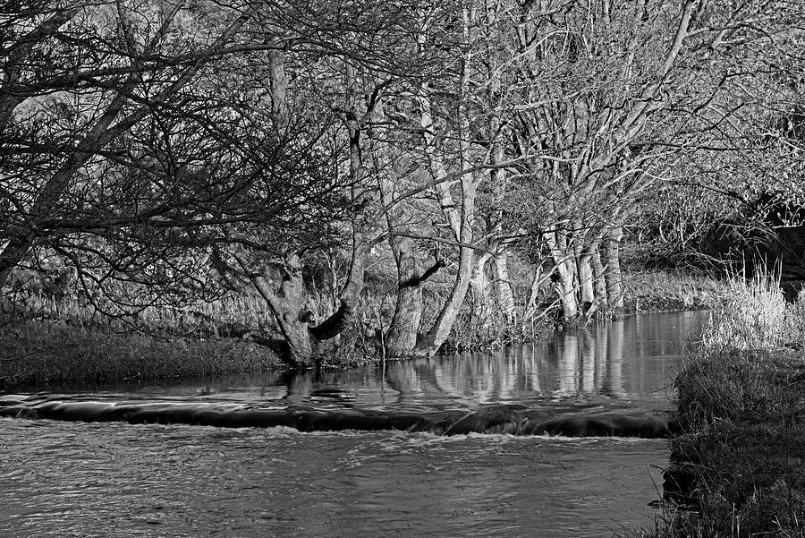 Riverside Trees - Wolfscote Dale Photograph