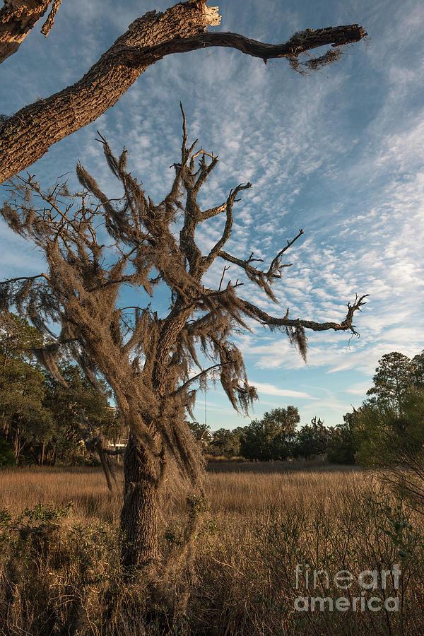 Salt Marsh - Lowcountry Of Charleston Photograph