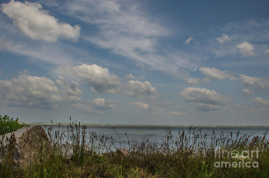 Salt Water Cattails Photograph