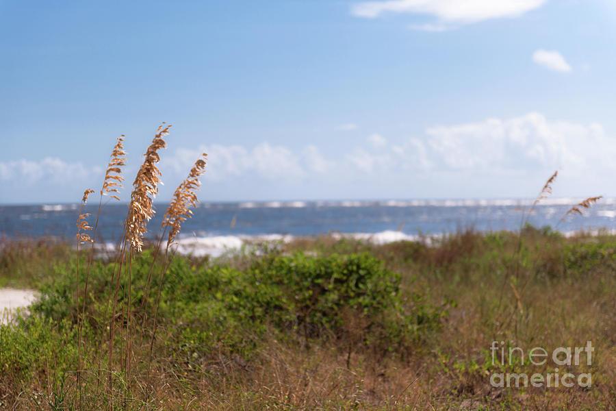 Salty Island Breeze Over Breach Inlet Photograph