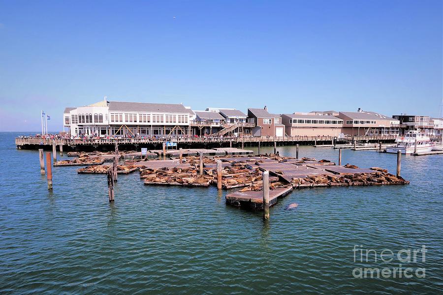 San Francisco Pier 39 Photograph