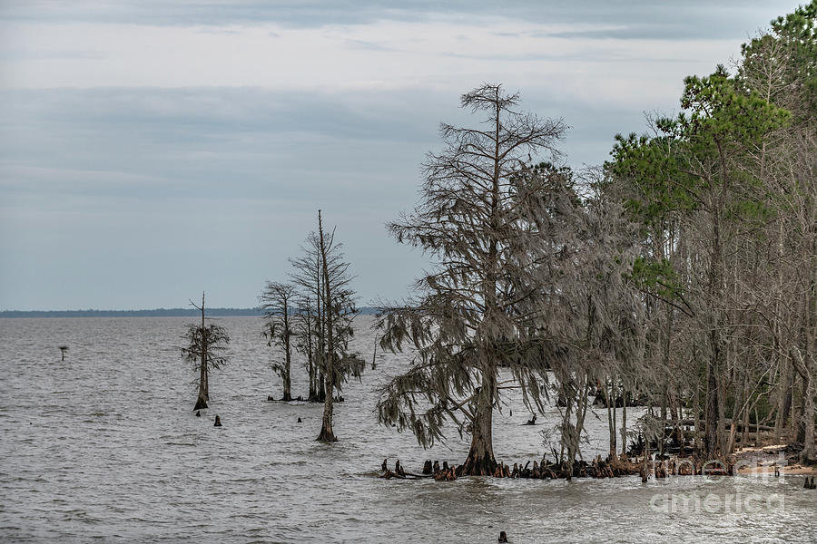 Santee Lake Moultrie - Berkeley Country Photograph
