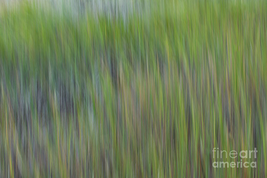 Sea Grass - Spartina Green Photograph
