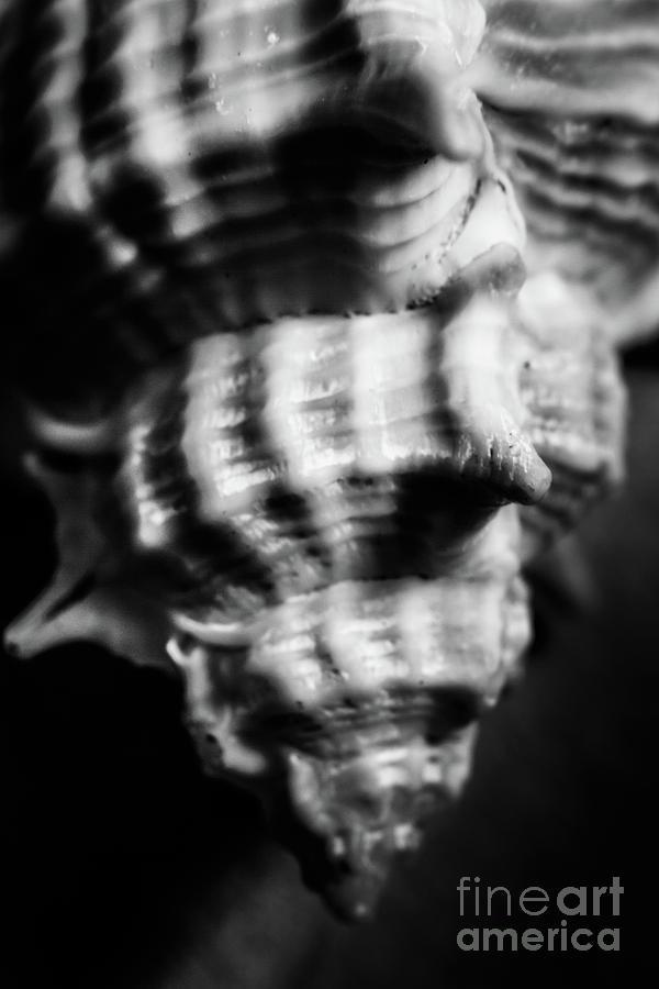 Sea Spiral Photograph