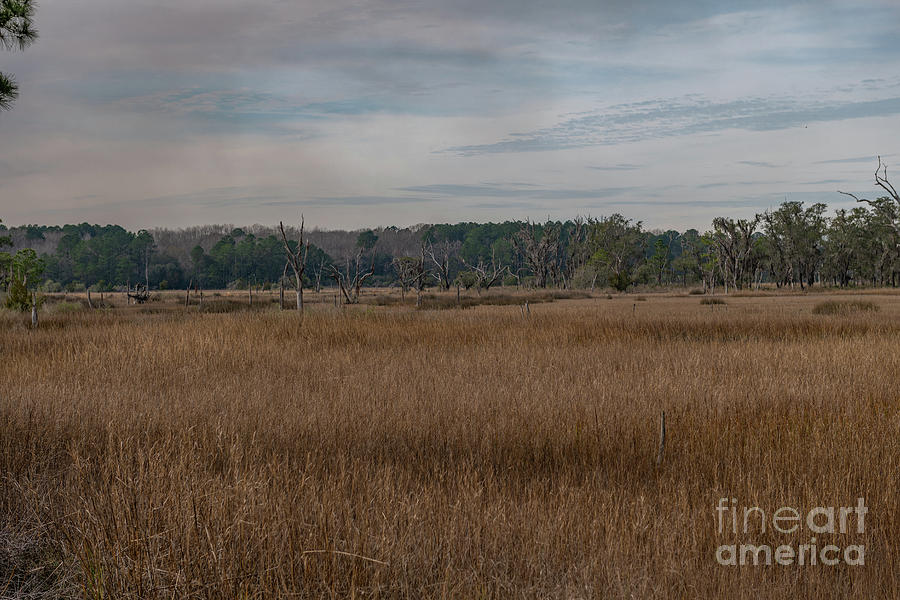 Season Of The Marsh Photograph