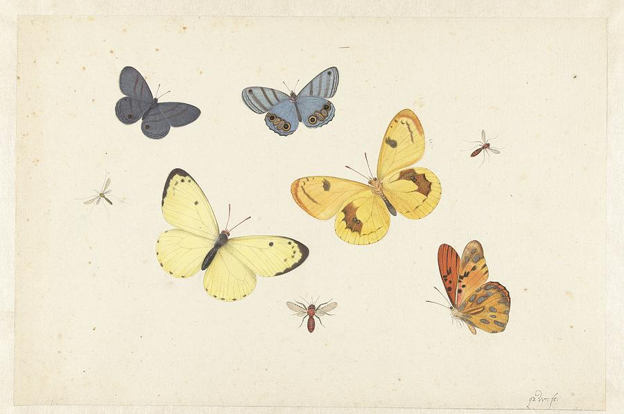 Sheet Of Studies With Five Butterflies Painting