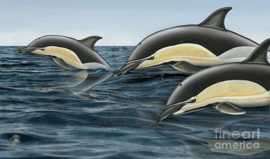 Short-beaked Common Dolphin - Delphinus Delphis - Gemeiner Delfin - Fineart Print-stock Illustration Painting