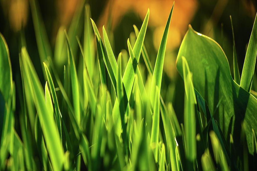 Spring Greens Photograph