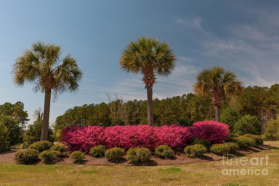 Spring In The Palmetto State Photograph