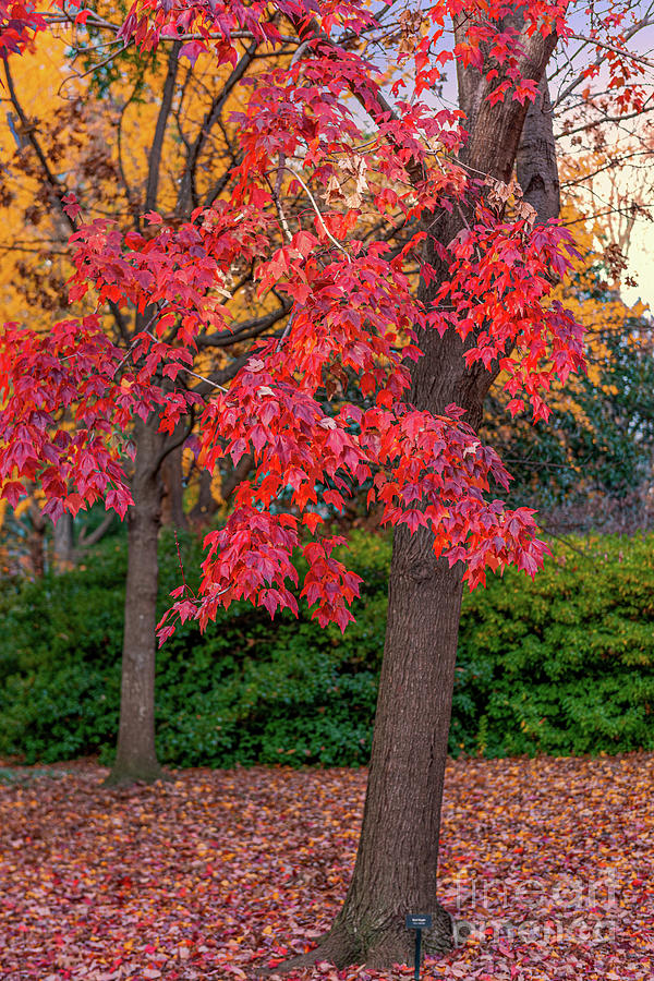 State Capital Grounds - Autumn Colors Photograph