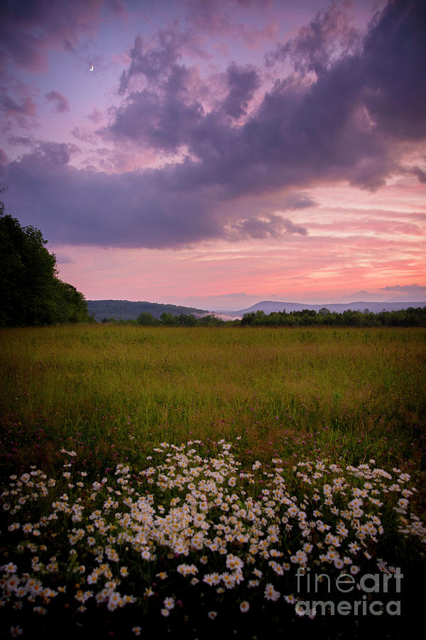 Sunset And Daisys Photograph