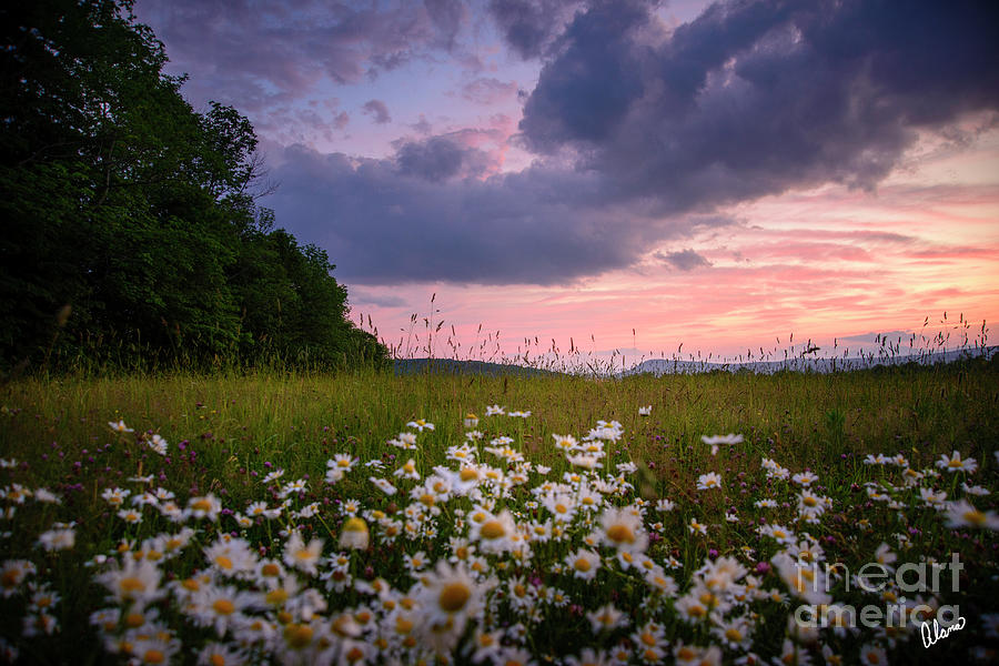 Sunset And Daisys II Photograph