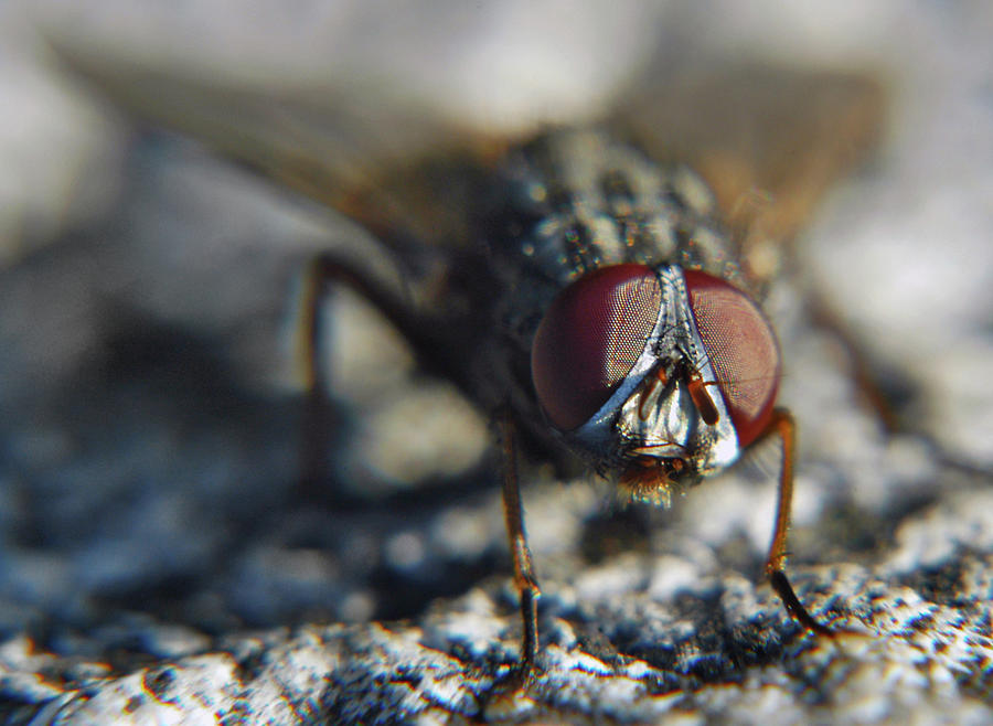 The Flys Eyes Photograph