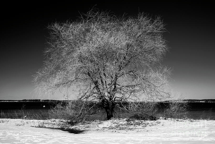 Tree At Oceans Edge Photograph