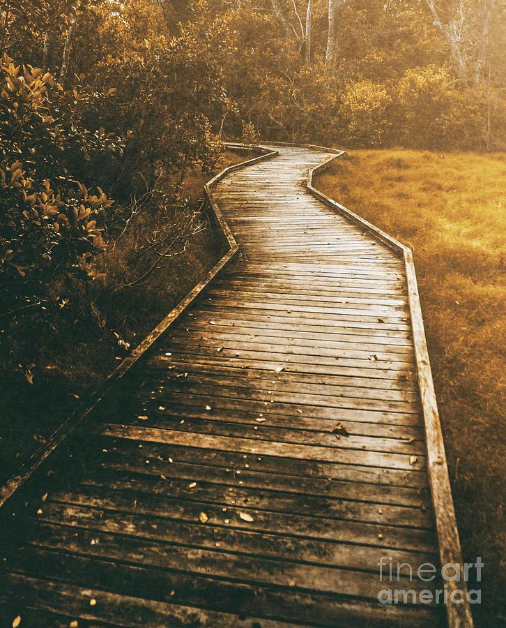 Twisting Trails Photograph