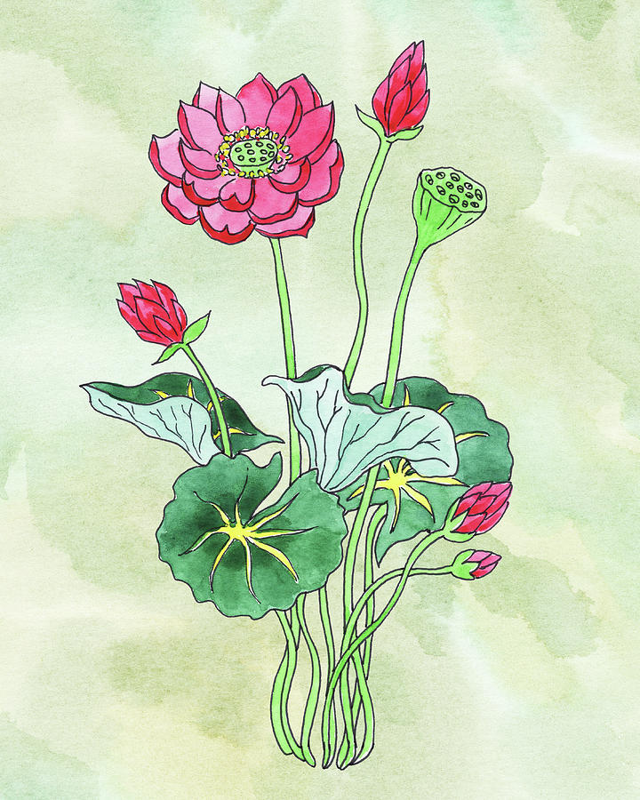 Watercolor Lotus Flower Botanical Painting