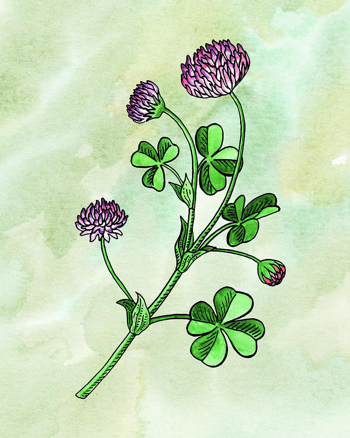 Watercolor Lucky Clover Flower Botanical Painting
