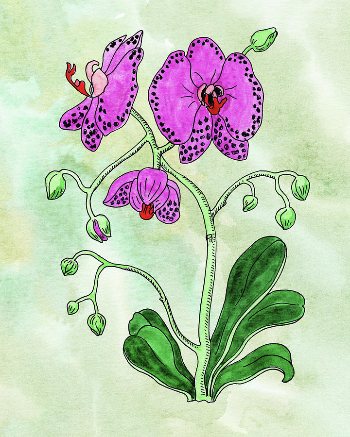 Watercolor Of Pink Moth Orchid Botanical Painting