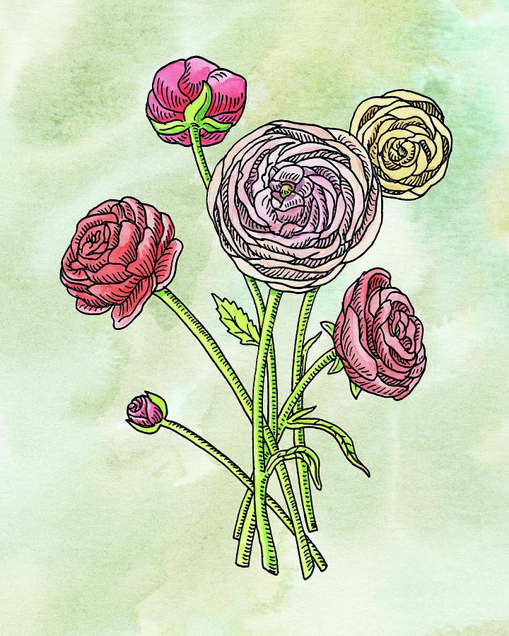 Watercolor Ranunculus Botanical Flowers Painting