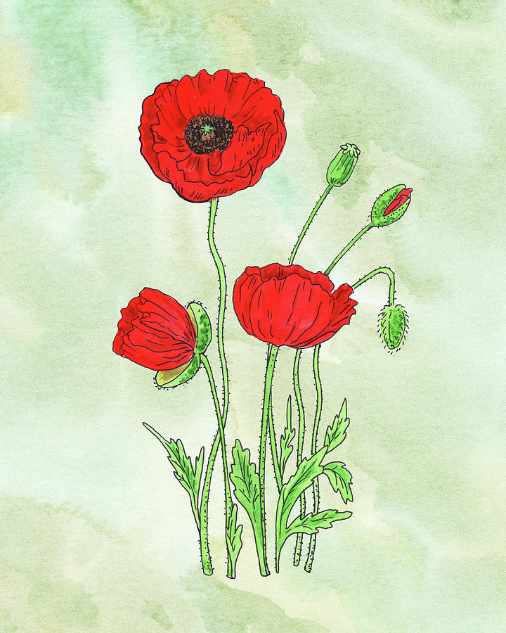 Watercolor Red Poppy Flower Botanical Painting