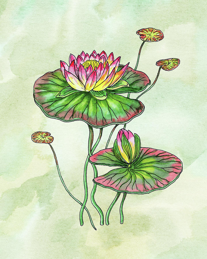 Watercolor Water Lily Botanical Flower Painting
