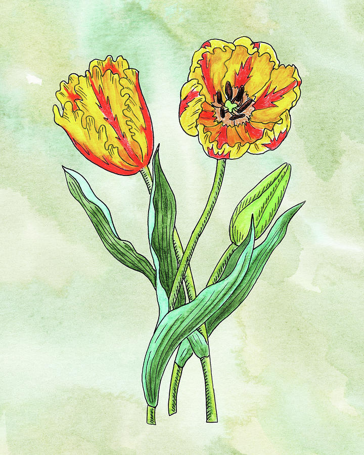 Watercolor Yellow Parrot Tulips Botanical Painting