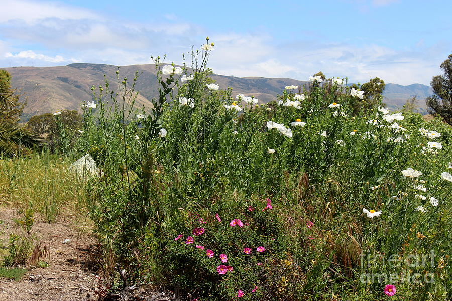 Wild Flowers And Hills Photograph
