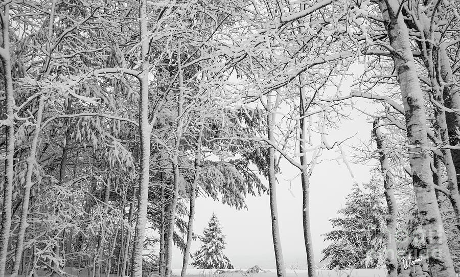 Winter Photograph