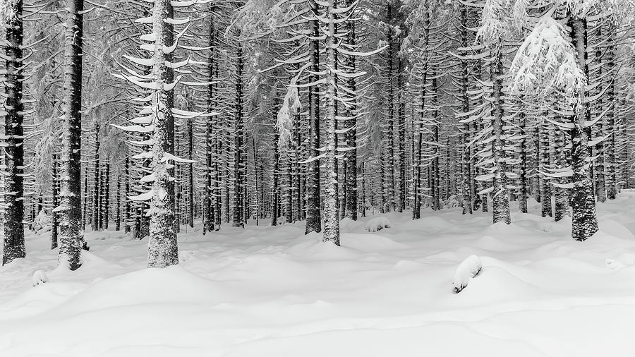 winter forest, Harz Photograph