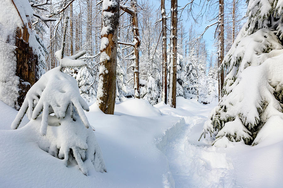 winter path, Harz Photograph