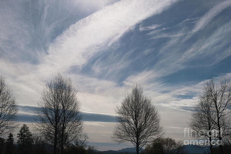 Winter Trees - Biltmore Estate Photograph
