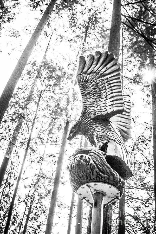 Wooden Guard Photograph